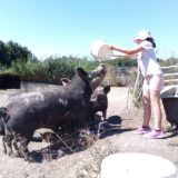 animaux ferme isere